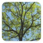 Spring Oak Tree Green Nature Scene Square Sticker