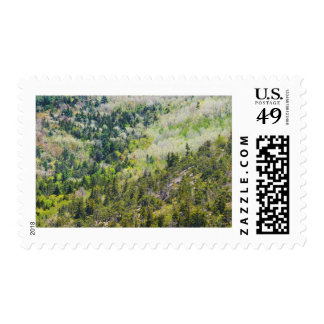 Spring On Cadillac Mountain Acadia National Park Postage Stamp