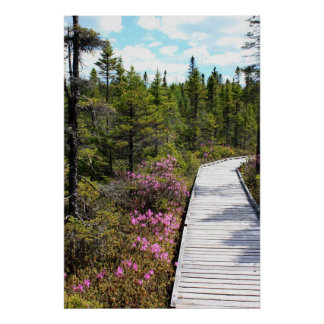 Spring on the Bog Walk Poster