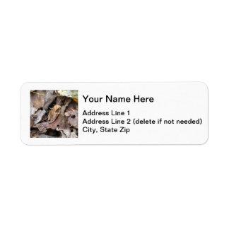 Spring Peeper Label