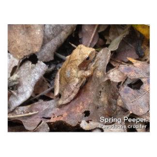 Spring Peeper Postcard