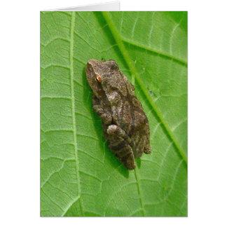 Spring Peeper (Pseudacris crucifer) Treefrog Items Card