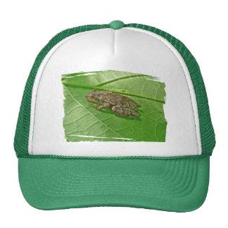 Spring Peeper (Pseudacris crucifer) Treefrog Items Trucker Hat