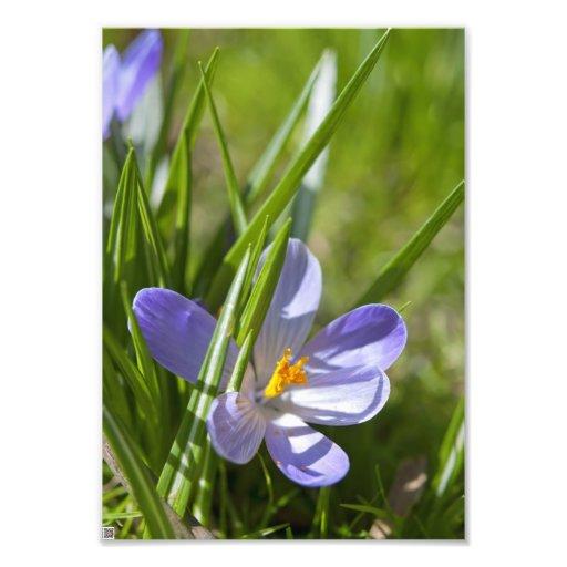 Spring Photo Print
