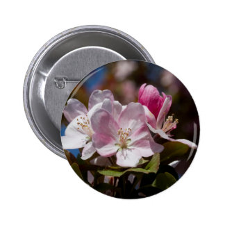Spring Pink Flowering Crabapple Blossoms Button