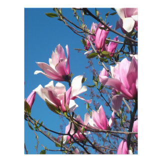 spring pink magnolia flowers in blue sky flyer