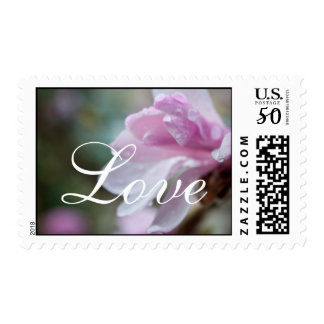 spring pink magnolia flowers with rain drops love postage