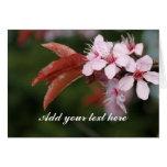 spring pink plum flowers greeting card