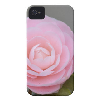 Spring Pink Rose iPhone 4 Cover