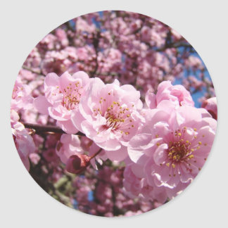 Spring Pink Tree Blossoms stickers seals Flowers