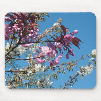 Spring pink white cherry flowers in blue sky mouse pad