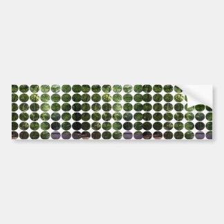 Spring Polka Dots Forest Light Bumper Sticker