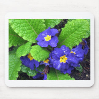 Spring Primroses Mouse Pad