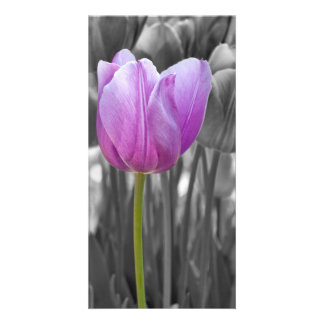 Spring Purple Tulip on Black and White Card