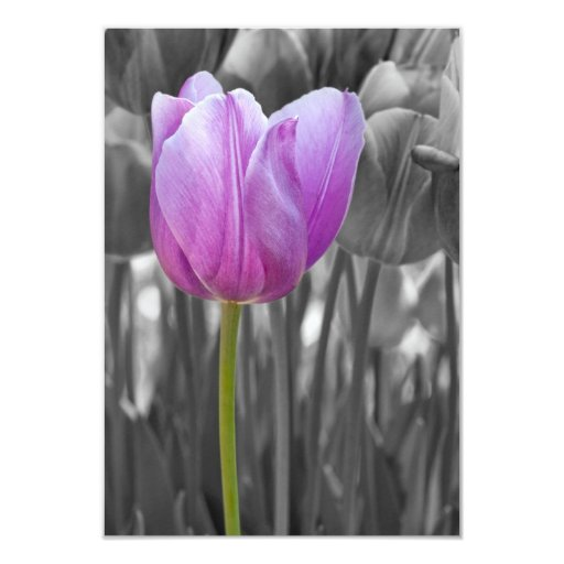 "Spring Purple Tulip on Black and White 3.5"" X 5"" Invitation Card"