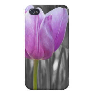 Spring Purple Tulip on Black and White iPhone 4 Cases