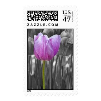 Spring Purple Tulip on Black and White Stamp