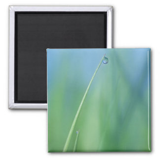Spring Rain 2 Inch Square Magnet