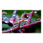 Spring Raindrop Jewels in the Forest Poster