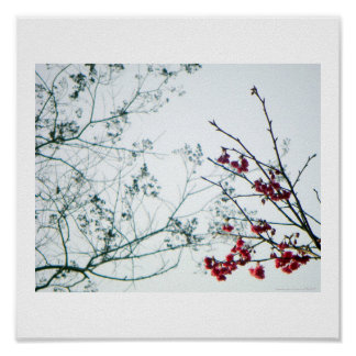 Spring Reach-Out/Cherry Blossoms Photo-Print Poster