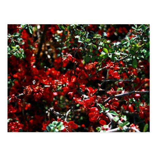 Spring Red Postcard