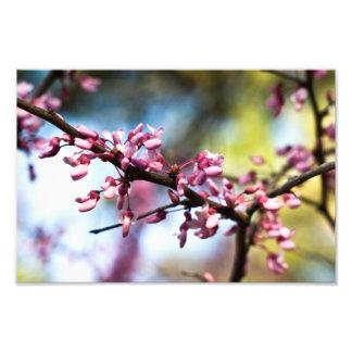 Spring Rhapsody Photo Print