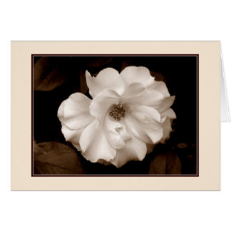 'Spring Rose (Sepia)' Greeting Card