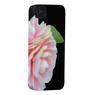 Spring Roses iPhone 4 Cover