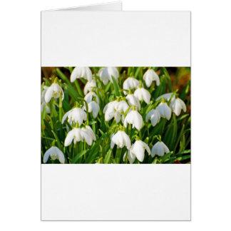 Spring Snowflake & Summer Snowflake or Loddon Lily Card