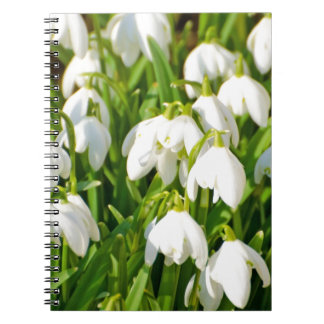 Spring Snowflake & Summer Snowflake or Loddon Lily Notebook
