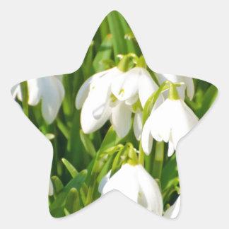 Spring Snowflake & Summer Snowflake or Loddon Lily Star Sticker