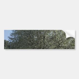 Spring sprung gift items bumper sticker