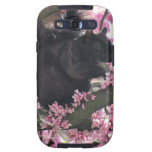Spring Squirrel Galaxy SIII Covers