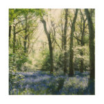 Spring Sunbeams Wood Print