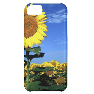 Spring Sunflower iPhone 5C Cover
