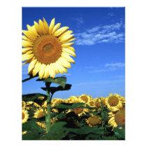 Spring Sunflower Letterhead