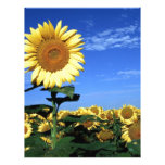 Spring Sunflower Personalized Letterhead