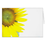 Spring sunflowers greeting cards