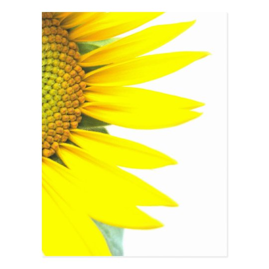 Spring sunflowers postcard