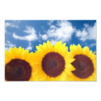 Spring Sunflowers Wall Print Photograph