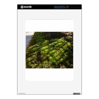 Spring Sunlight iPad Decals