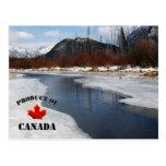 Spring Thaw in Banff Postcard
