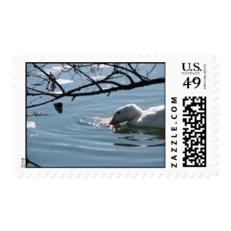 """Spring Thaw Swim"" Postage"