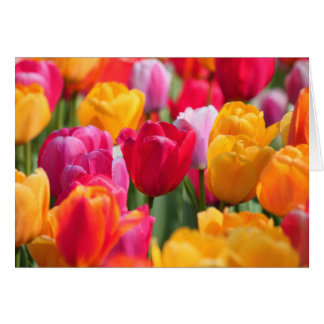 Spring Time at the Sunken Gardens2  2013 Cards