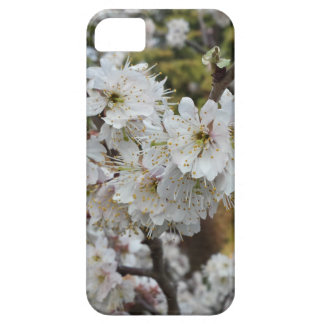 Spring Time Cherry Blossoms iPhone SE/5/5s Case