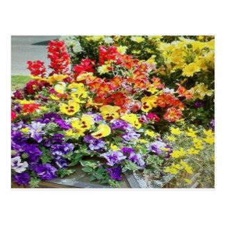 Spring Time Flowers Postcard