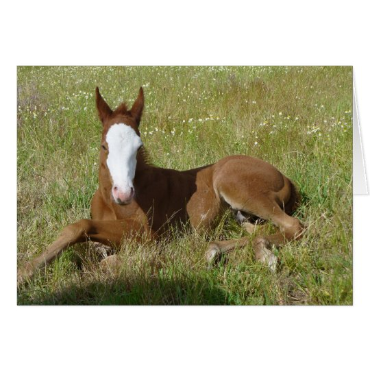 Spring time foal card