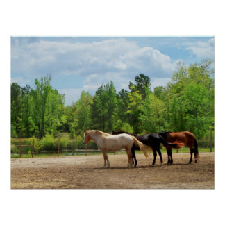Spring Time Horses Poster