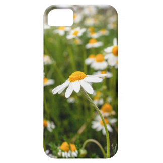 spring time iPhone SE/5/5s case