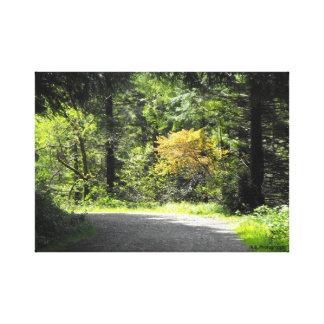 Spring Trail Canvas Print
